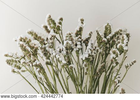 Blooming white statice flower on a gray  background