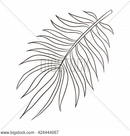 Hand Drawn Exotic Rainforest Palm Leaves Vector Isolated Illustration For Logo, Emblem, Template, St