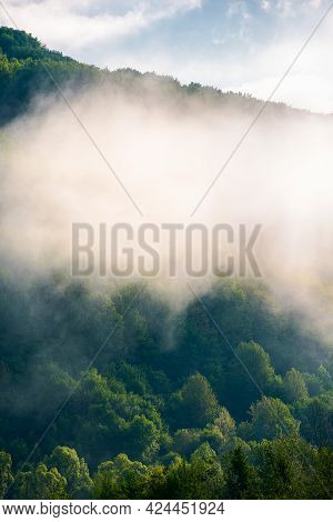Forest In The Morning Fog. Beautiful Nature Scenery In Spring. Green Nature Background On A Sunny We