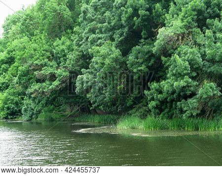 Beautiful Fresh Green Forest Tree Branches Over Lake Calm Idyllic Water Surface