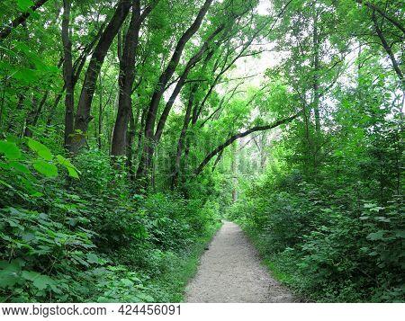 Beautiful Footpath Through A Dense Green Forest, Summer Time