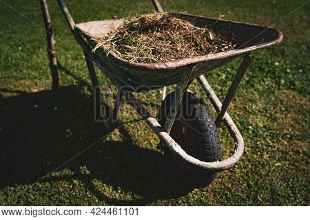 Vintage Metal Wheelbarrow With Cut Dry Grass And Tree Branches In The Garden. Cleaning And Garden Ma