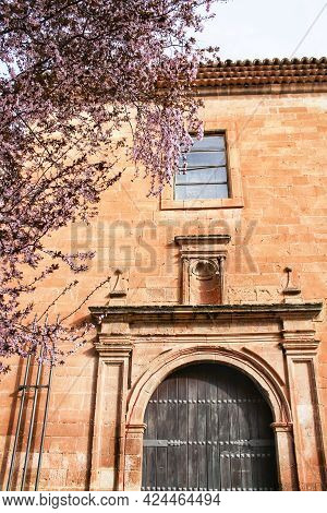 Beautiful Pink Cherry Tree In Bloom Next To San Miguel Arcangel Parish In Alcaraz In Spring. Old And