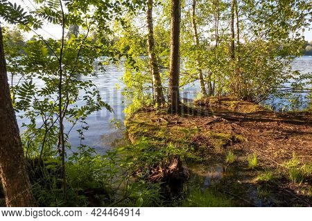 The Shore Of A Forest Lake. Sunset Light. Finnish Nature. Summer Background. High Quality Photo
