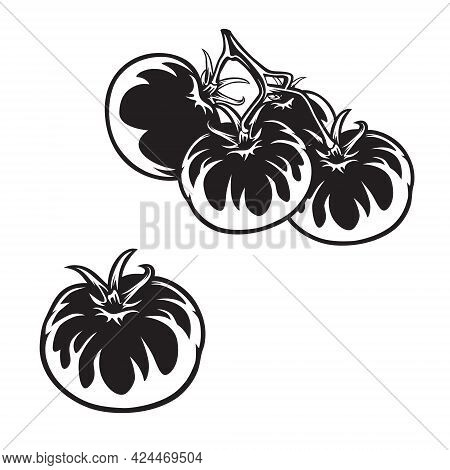Tomato Vector Drawing Set. Isolated Tomato. Vegetable Engraved Style Illustration. Detailed Vegetari