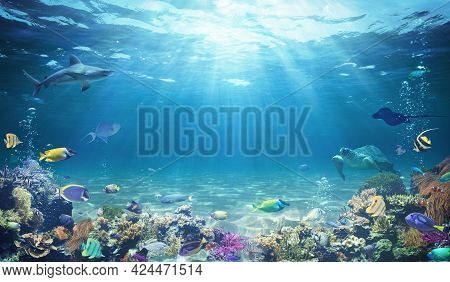 Underwater Diving - Tropical Scene With Sea Life In The Reef