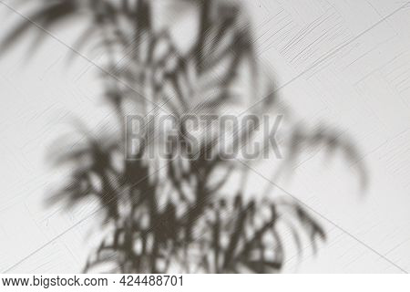 The Abstract Blurry Out Of Focus Background With Harsh Shadow On The Wall