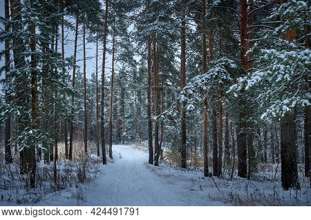 Mystic Winter Forest In Russia. Concept Of Winter Holidays And New Year Holidays.