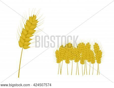 Vector Illustration Of A Golden Ear And A Set Of Ears In The Form Of A Field Plot