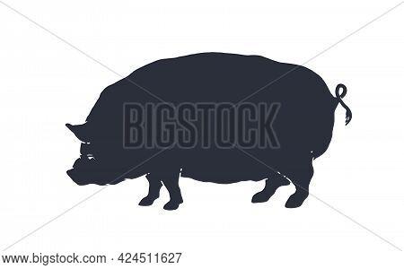 Pig, Pork. Vintage Logo, Retro Print For Butchery Meat Shop, Pig Silhouette. Logo Template For Meat