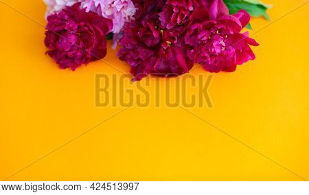 Peonies on yellow background with copy space for your message. Seasonal flowers natural card, wallpaper or poster