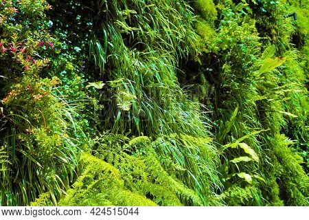 Lush Plants On A Contemporary Vertical Wall Taken On An Outdoor Patio At A Vertical Garden In A Resi