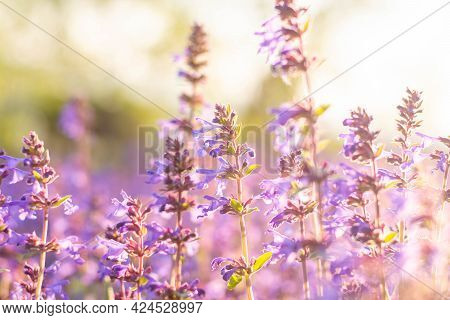 Lavender Flowers. Sunset Over A Summer Purple Lavender Field . A Bouquet Of Fragrant Flowers In The