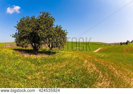 Blooming Negev Desert. Beautiful day in April. Walk among fresh green grass and wildflowers. Magnificent blooming spring in Israel.