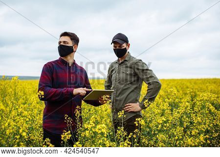 Two Farmers In Masks With A Tablet In Their Hands Stand In The Middle Of A Blooming Rapeseed Field A