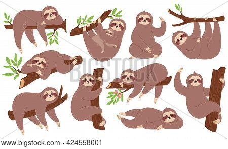 Sloth. Funny Sloths Hanging On Branch, Climbing Tree, Sleeping. Cute Baby Animal With Mother. Lazy S