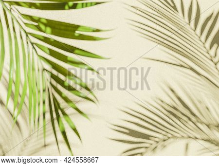 Palm Leaf Shadow Background With Beige Wall And Out Of Focus Palm Leaf. 3d Render