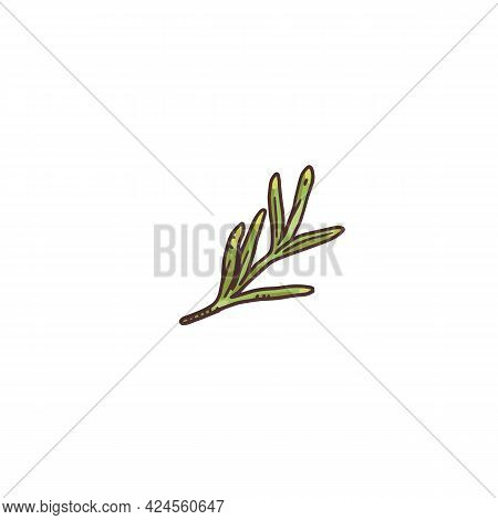 Small Rosemary Plant Twig - Little Seasoning Herb Piece Drawing