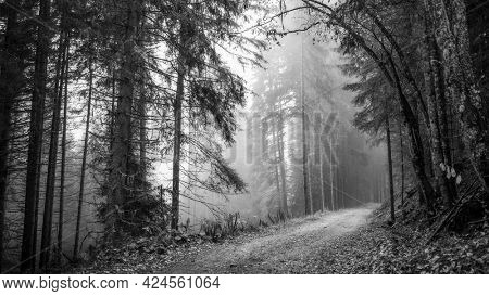 Pathway in a foggy woods bw