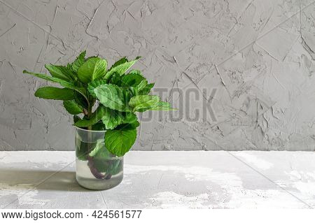 Sprigs Of Mint In A Cup Of Water On A Gray Concrete Background. High Quality Photo