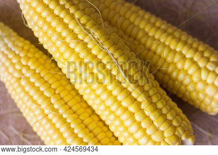 Ear Of Corn Close Up, Seasonal Vegetable Sweet Corn Tasty And Healthy