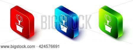 Isometric Flower Tulip In Pot Icon Isolated On White Background. Plant Growing In A Pot. Potted Plan