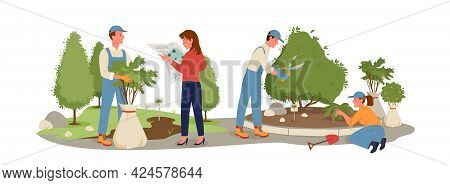 Garden Landscaping, Agriculture Work On Bushes Cultivation, Workers Planting Tree Sapling