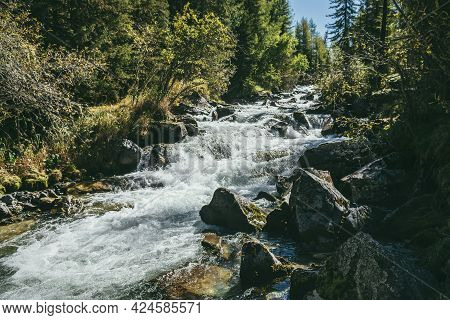 Scenic Alpine Landscape With Powerful Mountain River In Wild Forest In Sunshine. Vivid Autumn Scener