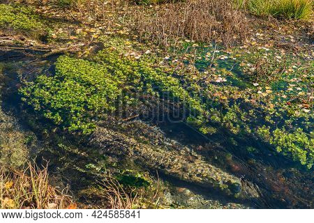 Scenic Autumn Landscape With Clear Water Of Mountain Brook With Green Plants And Yellow Fallen Leave