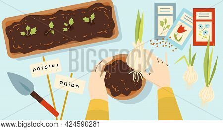 Hands Of Person Planting Edible Plants And Herbs, Flat Vector Illustration.