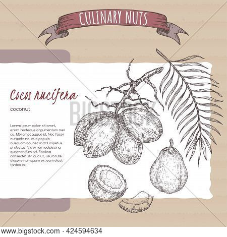 Cocos Nucifera Aka Coconut Tree Branch And Nuts Sketch On Cardboard Background. Culinary Nuts Series