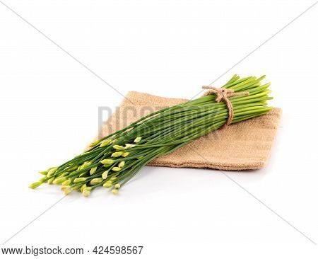 Flowering Chinese Garlic Chives On The White Background