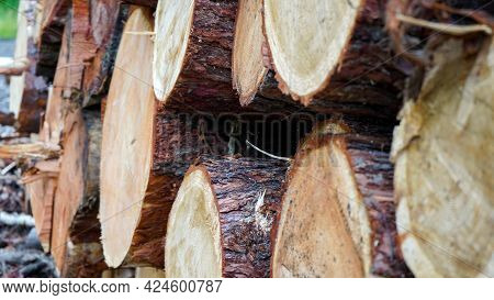 Pine Logs, Cut Down By Logging Against The Background Of The Forest