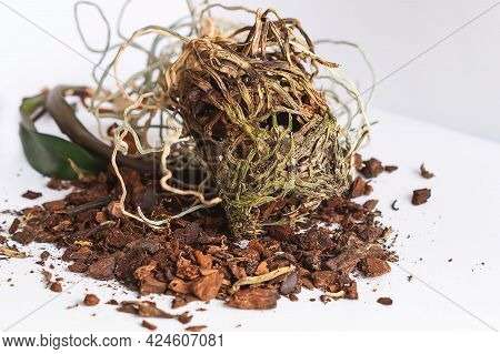 On The Table Are The Tangled Dry Roots Of A Dead Orchid Taken Out Of A Pot. Overgrown Orchid Roots.