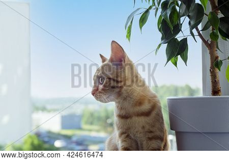 Close-up Of A Small Cute Ginger Tabby Kitten Sits On The Windowsill And Looks To The Side. A Pet. Se
