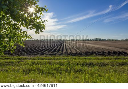 Plowed Field Planted By Agricultural Plants In A Bright Sunny Day.