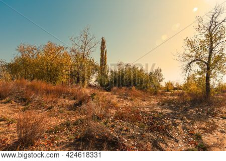 Autumn Landscape With Bright Sun And Highlights. Sand Dunes Overgrown With Trees And Bushes With Yel