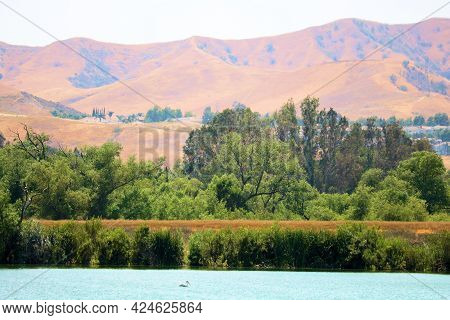 Arid Hills Covered With Dry Grasslands During Drought Conditions Surrounding Prado Lake With A Ripar