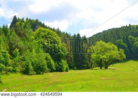 Typical rural landscape in the plains of Transylvania, Romania. Green landscape in the midsummer, in