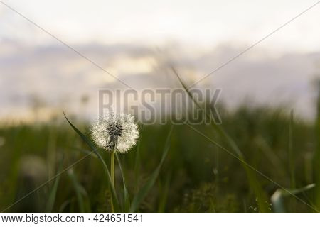 Summer, Nature, Spring, Freshness - Background Of Fresh Wild Field Beautiful Natural Flower Plant On