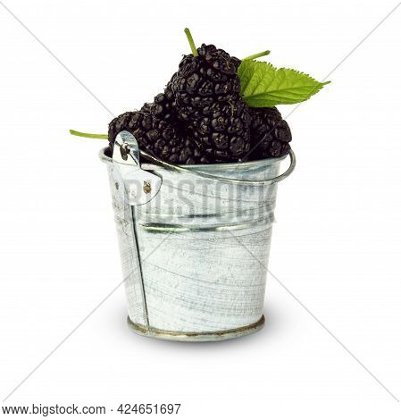 Mulberry With Green Leaf In An Iron Bucket Isolated On White Background. Black Mulberry