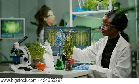 Biologist Scientist Talking Solution From Medical Flask Putting On Green Sapling For Genetic Experim