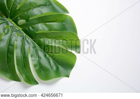 Green Herbal Leaves On White Background. Copy Space For Branding ,mock-up. Monstera Leaf Background.