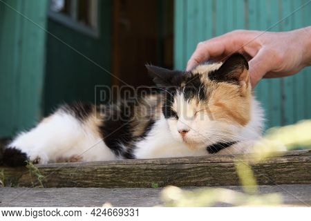 Village Cat Spotted In The Street And Basks In The Sun On The Porch. Mans Hand Strokes A Cat On The