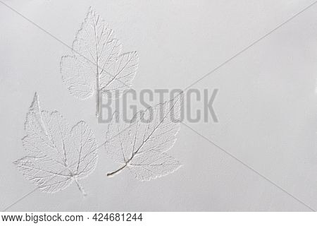 Silhouette Of Tree Leaf Printed On  Smooth Flat Surface Or Table. Top View Of White Dust, Sand Blow,
