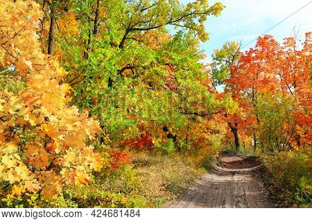 Calm fall season. Beautiful landscape with road in autumn forest. Maples and oak trees with green, yellow and orange leaves and footpath in the woodland in sunny day