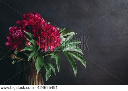 Beautiful Dark Crimson Peony On A Dark Background. Selective Focus.