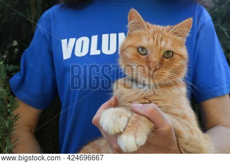 Volunteer With Homeless Cat In Animal Shelter, Closeup