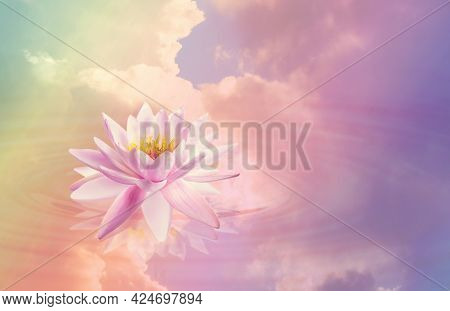 Floating Beautiful Lotus And Reflection Of Sky With Fluffy Clouds On Water, Toned In Pastel Rainbow