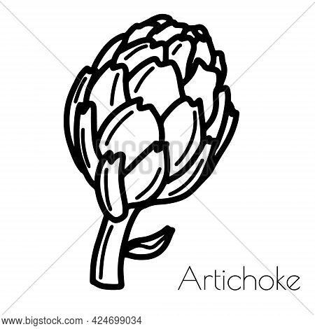Digital Hand Drawn Artichoke. Vector Isolated On White Background.